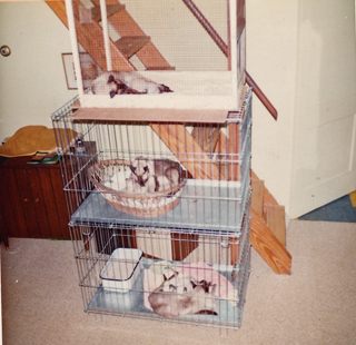 Mother's Cats, c. 1967